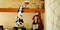 Веселые хроники милых плюшевых панд