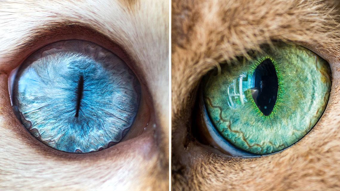 Как сделать свои глаза кошачьими 972