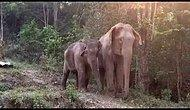 This Moment of a Mother and Baby Elephant's Reunion After 3 Years Will Make You Shed Tears