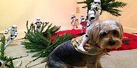 Армия штурмовиков из «Звездных войн» ставит елку