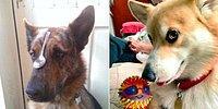 Фото-рейтинг самых очаровательных собак