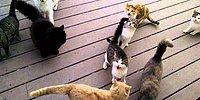 Открывай! Голодные кошки толпятся у двери