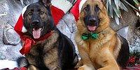 Дарить животных в качестве новогоднего сюрприза – это жестоко! И вот почему…