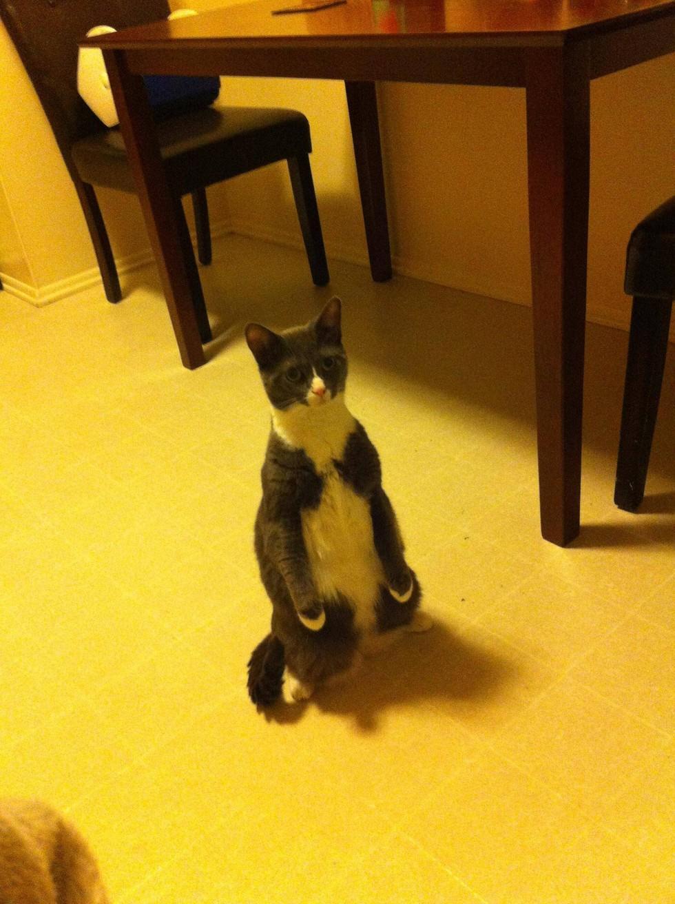 Человек который не видел котов