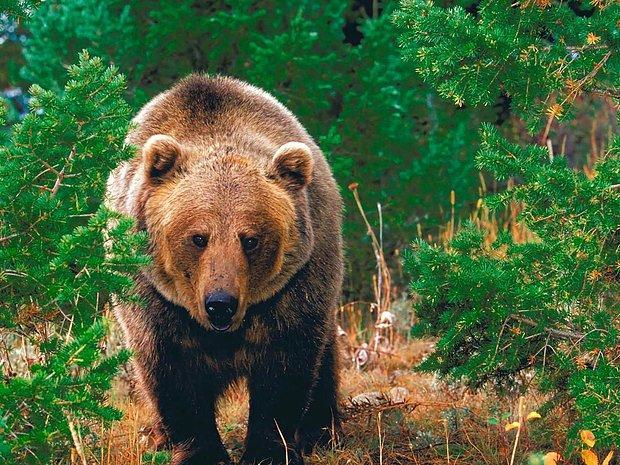 'Bana ormanda üstüne binip gezmelik bir ayı bulun, fotosunu yayınlar şekil yaparız.'