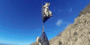 Горных коз из Айдахо перевозят на вертолетах