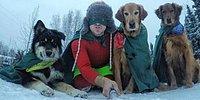 Очаровательные собаки Тима из Аляски покоряют интернет