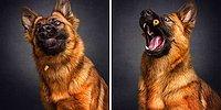 Уморительные фото собак, пытающихся поймать еду на лету