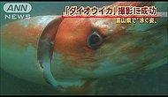 Гигантский кальмар длиной в 4 метра!
