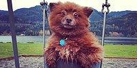 15 собак, похожих на плюшевых медведей