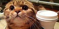 12 кошек с типичными привычками всех девушек
