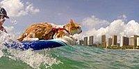 Лови волну! Увлекательное видео о кошке- серфингистке