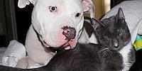 Три ослепленные кошки нашли поддержку и заботу у двух питбулей