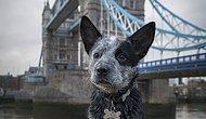 Жизнь лондонского пса