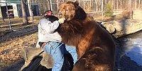 Огромный медведь играет с мужчиной