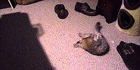Дрессированный домашний кот беспрекословно выполняет команды хозяина!😻