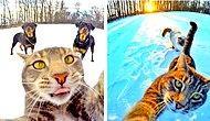 Кот, который делает селфи, прославился на весь мир