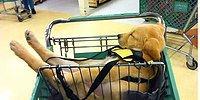 18 собак, имеющих привычку спать в совершенно неожиданных местах