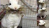 29 кавайных фото животных из японского Твиттера