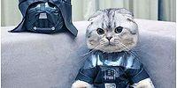 Монолог усатых: недовольные кошки в одежде