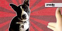 """11 животных, заслуживающих премию в номинации """"Лучший актер"""""""