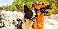 Трогательная история о дружбе собак Лотти и Гриззли растопит ваше сердце!