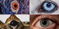 Видео: Как видим мир мы и животные