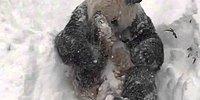 Панда радуется снегу и сугробам