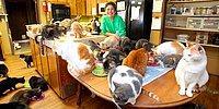 Американка содержит у себя дома 1100 кошек