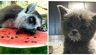 12 фото забавных кушающих животных. То, что надо для поднятия настроения ;)