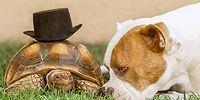 Необычная парочка: собака и черепаха покоряют Instagram