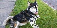3D принтер подарил собаке новые ноги