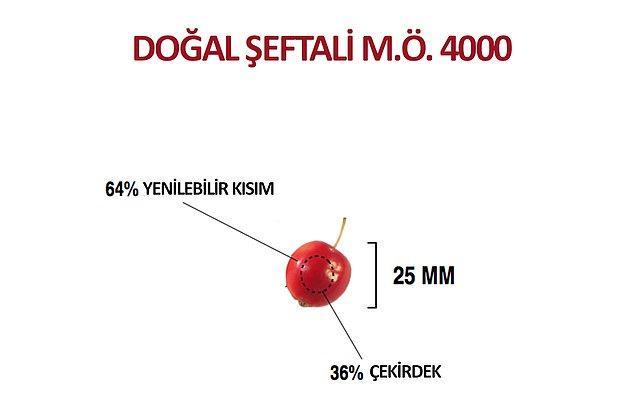 Yabani Şeftali