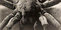 8 снимков из архива National Geographic, изменивших историю фотографии