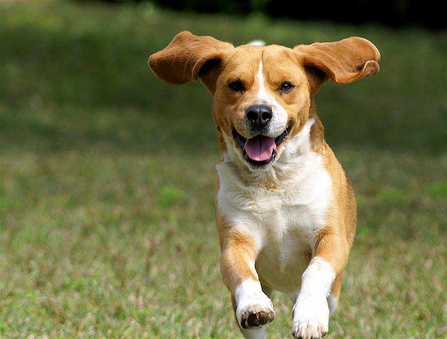 6. Köpeğinizle zaman geçirin