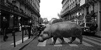 Идея для фото: животные на улицах Европы