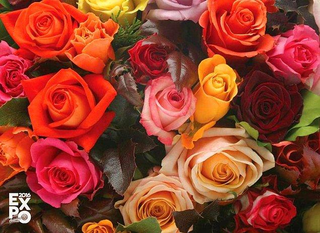 3. Sıkça aldığımız güllerin dünya üzerinde 15.000 farklı türü vardır.
