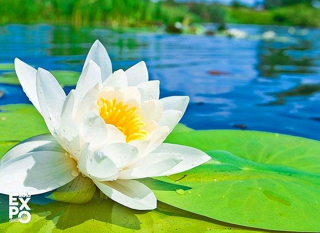 6. Dünyanın en eski fosil çiçeği 2001 yılında Çin'de bulunmuştur. 125 milyon öncesine dayanan bir su zambağıdır.