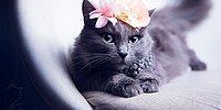 Бездомная кошка становится фотомоделью
