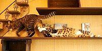 14 фото кошачьей нежности на День Всех Влюбленных