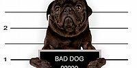 14 необычных законов о домашних животных в разных странах мира