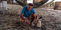 Чинчин – пингвин, который никогда не покидает своего спасителя