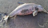 Люди замучили насмерть детеныша дельфина, делая с ним селфи!
