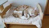 19 ситуаций, понятных тем, кто ненавидит делиться кроватью