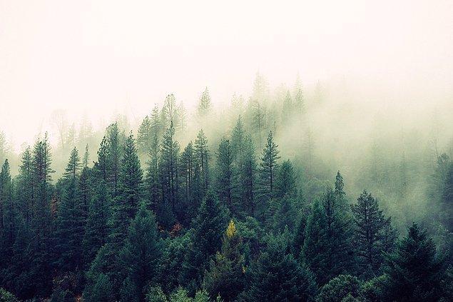 6. Türkiye'nin en geniş el değmemiş, doğal, yaşlı orman ekosistemini