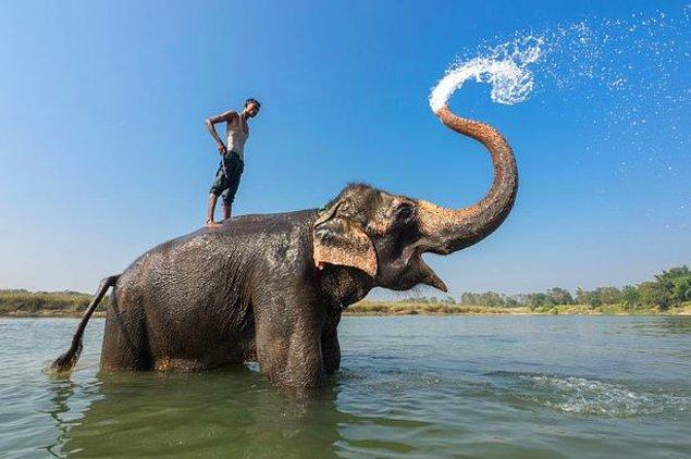 45. Nepal'de fil duşu alın!