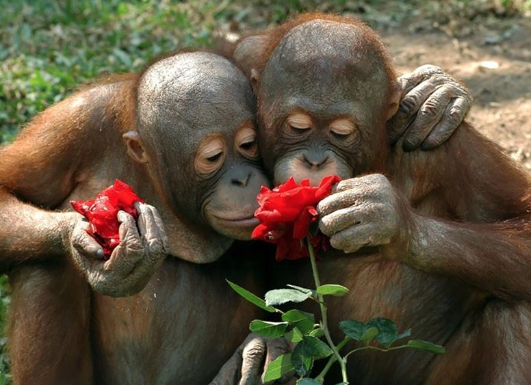 случалось красивые открытки с обезьянами характеристики дома