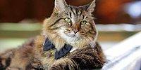 Встречайте самого старого в мире кота из Книги рекордов Гиннесса