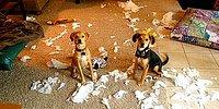 30 Adorable Dogs Getting Busted Right At Their Crime Scene!
