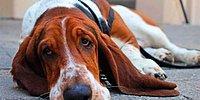 15 типичных ошибок владельцев собак